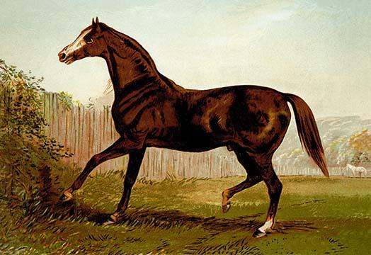 Horse Prints Art To Decorate Your Home